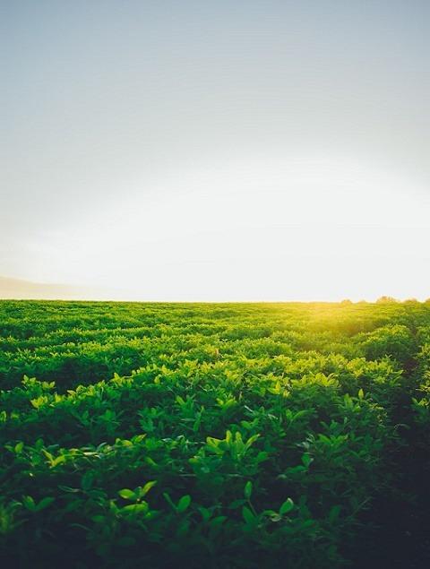 Lesioi Farm Stay Nature Trips Tigoni